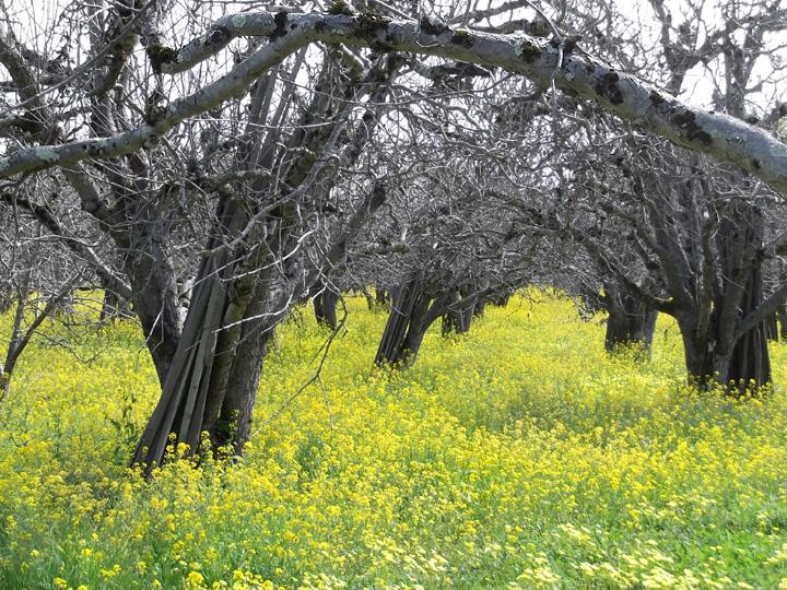 Corralitos Open Farm Tours tree image