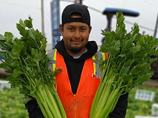 celery-picker