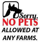 sorry-no-pets