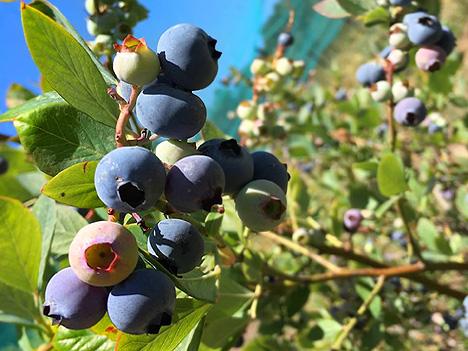 Fruitilicious-main-pict