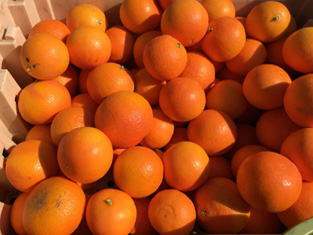 Fruitilicious2
