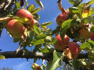 Fruitilicious3