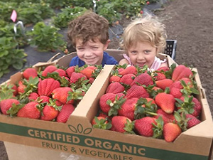 strawberry-kiddos
