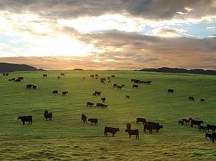 Pacines-Ranch-2-pict