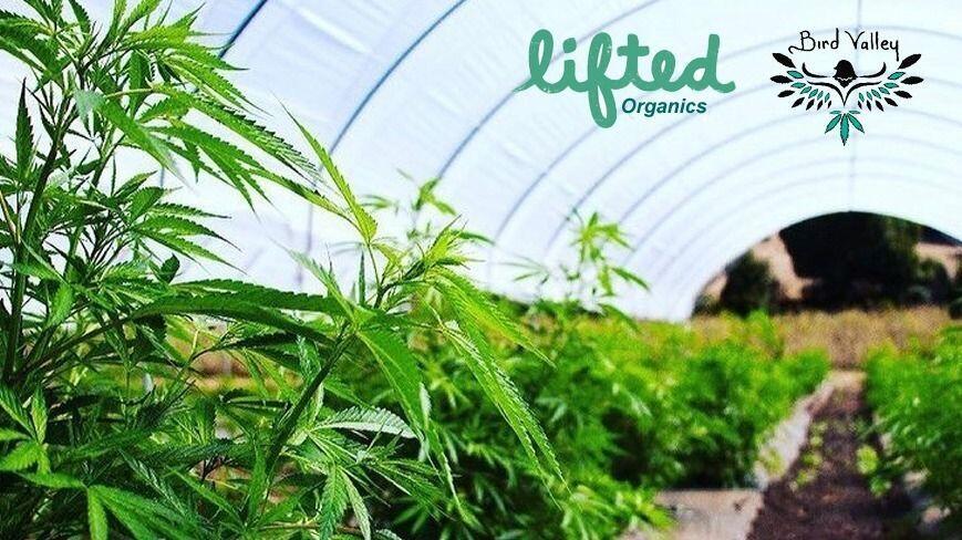 cannabis tour image